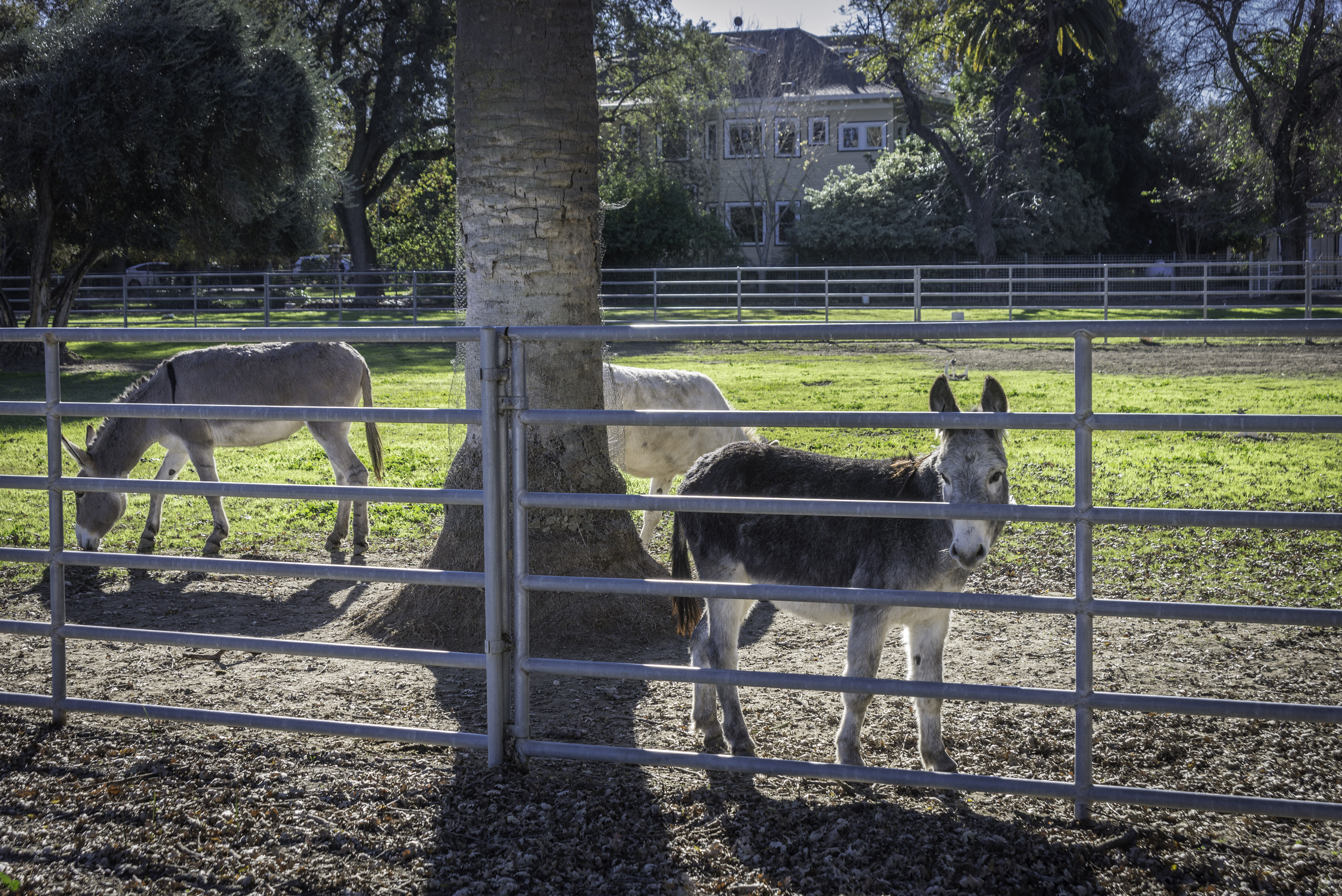 Donkey 101: Davis, CA December 2&3, 2017